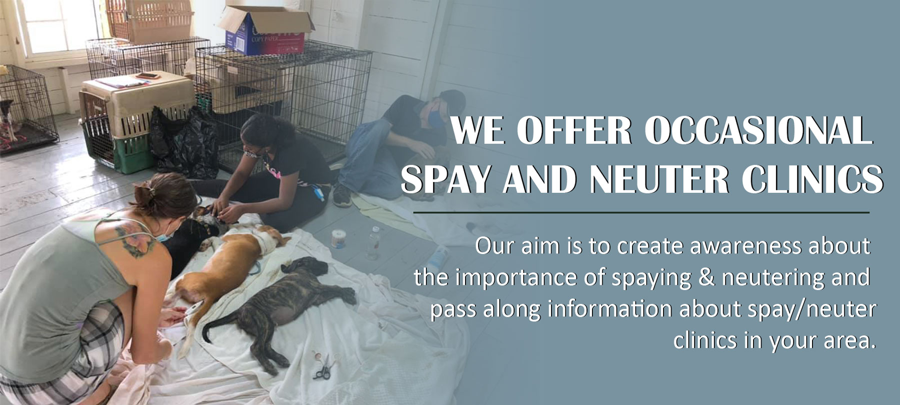 CAWS_SPAY_and_Neuter_Banner